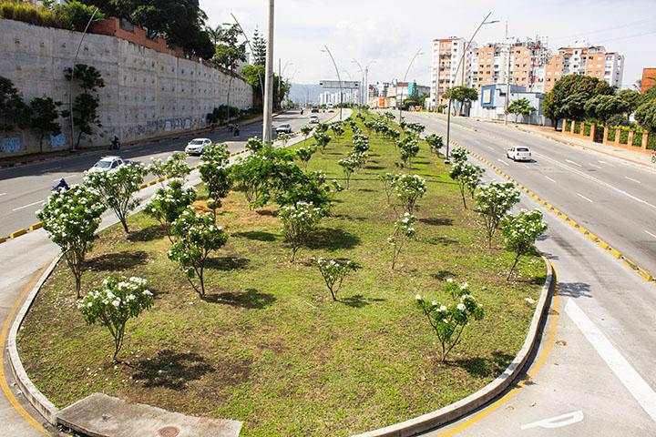 Con más de $4.000 millones embellecen zonas verdes de la ciudad | EL FRENTE