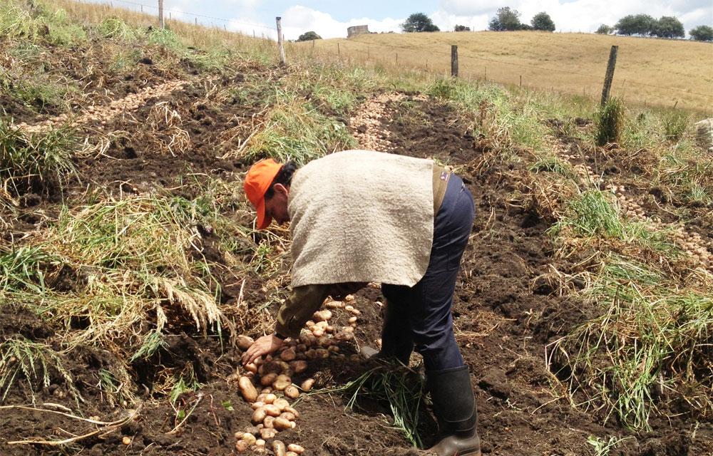 Estrategia de agricultura por contrato. Coseche y venda a la fija  | EL FRENTE
