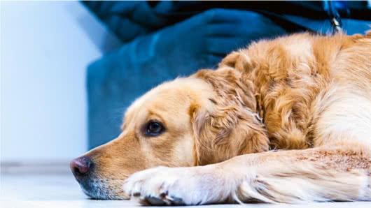 Un perro espera a su dueño a la salida de una cárcel   EL FRENTE