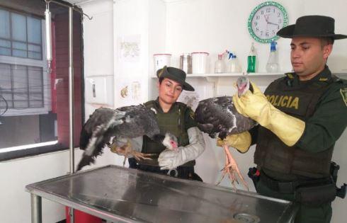 Policía ambiental rescata aves en peligro de extinción | EL FRENTE