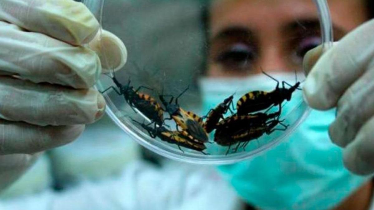 Confirman libres de la enfermedad de Chagas a 19 municipios en Santander | EL FRENTE