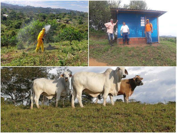 Participación santandereana. El ICA realizó reunión virtual en buenas prácticas agropecuarias   Local   Economía   EL FRENTE