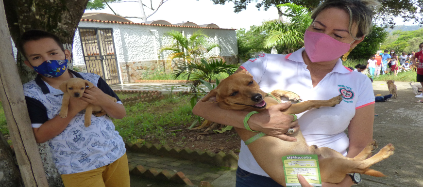 En lo corrido del año van 6.476 caninos y felinos vacunados | Metro | EL FRENTE