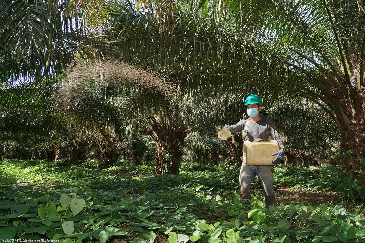 Congreso virtual de palmicultores. Afrontar desde la agroindustria la Covid-19 y cambio climático   Nacional   Economía   EL FRENTE