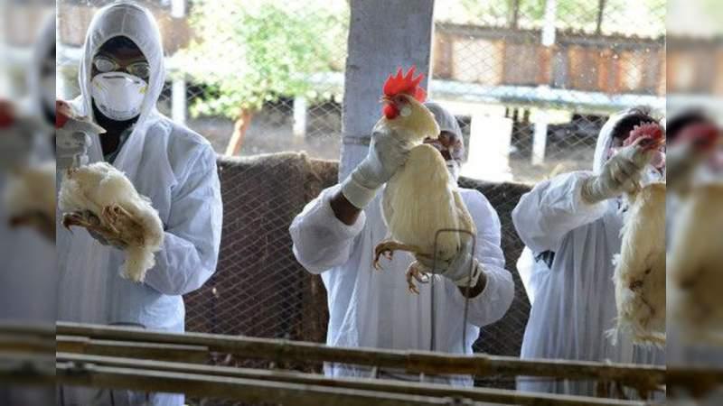 Rusia detecta primer caso gripe aviar H5N8 en un ser humano   EL FRENTE