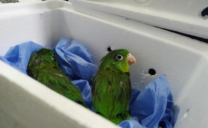 Golpe al tráfico de especies protegidas | EL FRENTE