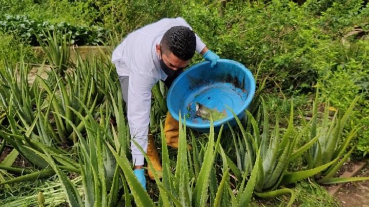 UPB amigable con el medio ambiente y sus alternativas naturales para control de plagas | Variedades | EL FRENTE