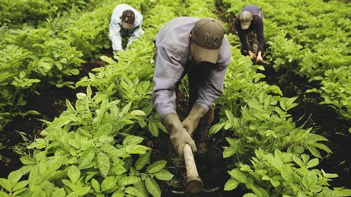 Buen momento para los renglones de alimentos y manufacturas en exportaciones | Nacional | Economía | EL FRENTE