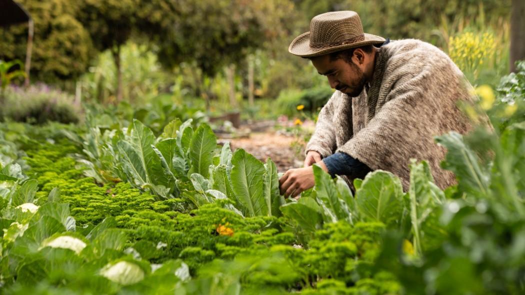 Sector agrícola de Santander está con la soga al cuello    Política   EL FRENTE