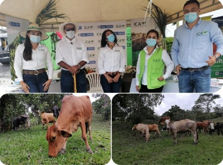 Respaldo del ICA a los hatos en Santander con salud y legalidad en las ganaderías de Vélez   Economía   EL FRENTE
