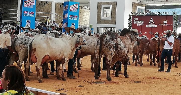 Superadas las expectativas en la Feria Ganadera de Bucaramanga con aporte a reactivación económica | Economía | EL FRENTE