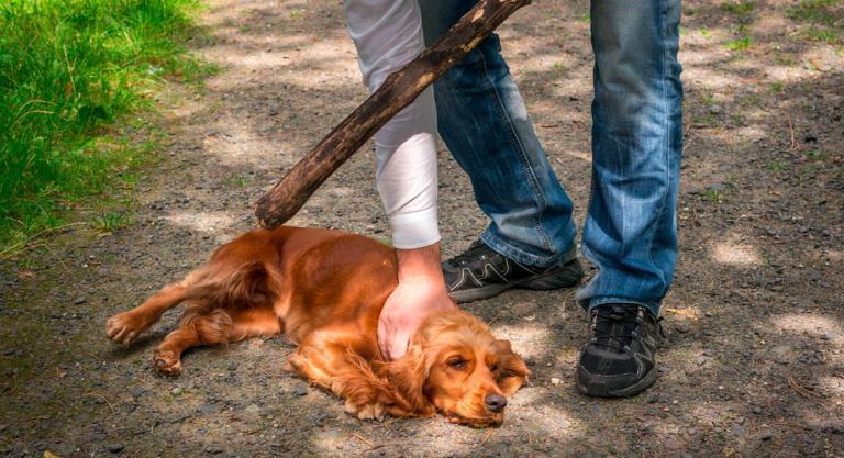 Cruel venganza: despellejó el perro de su vecina tras una discusión    EL FRENTE