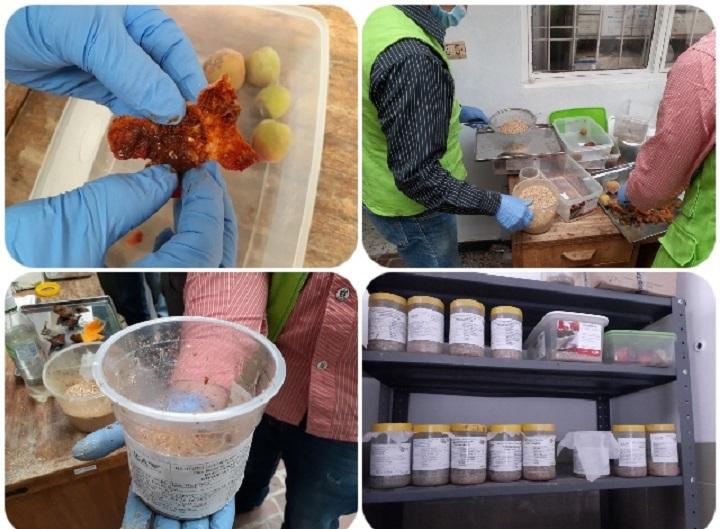 ICA fortalece calidad fitosanitaria en provincias de Santander para cosechas de frutas sanas   Local   Economía   EL FRENTE