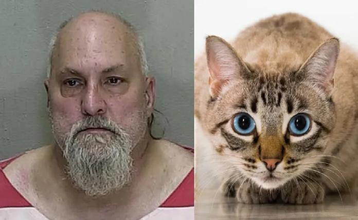 Hombre mata a su vecino en disputa por un gato  | Noticias | Mundo | EL FRENTE